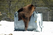 bear-proof-container-Copy